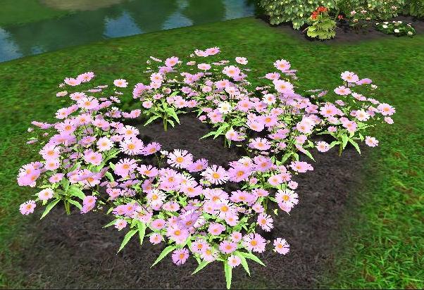 Perennial flowers wiki for gardenquest purple dome new england aster purpledomenewenglandasterg perennial mightylinksfo